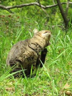 草むらの中に座っている猫の写真・画像素材[4463781]