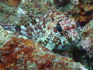 魚のクローズアップの写真・画像素材[4646740]