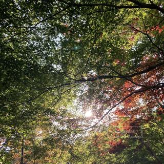 木漏れ日の写真・画像素材[4467267]