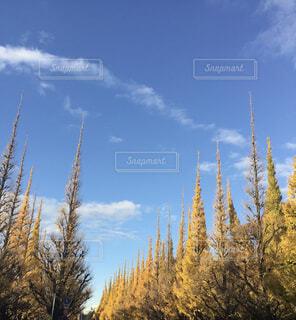 銀杏並木の写真・画像素材[4501951]