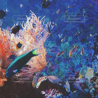サンゴの水中ビューの写真・画像素材[873860]