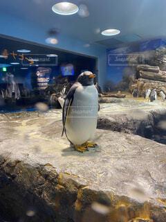 ペンギンさんの写真・画像素材[4522485]