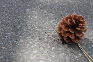 春の写真・画像素材[467906]