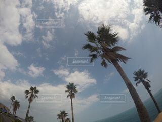 宮崎の空とヤシの木。の写真・画像素材[4474714]