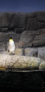 ペンギン - No.193139