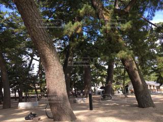 風景 - No.215749