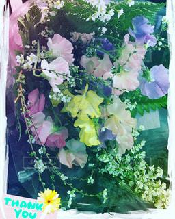 花の写真・画像素材[192288]