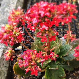 近くの花のアップの写真・画像素材[1146539]