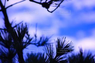空の写真・画像素材[213320]