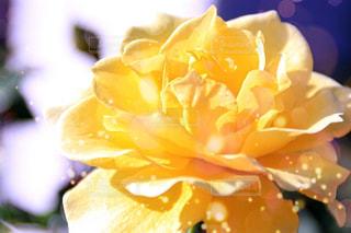 花の写真・画像素材[255024]