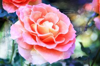 花の写真・画像素材[255031]