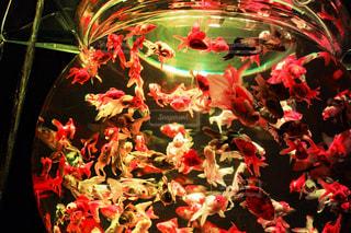 魚の写真・画像素材[258312]