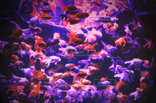 魚の写真・画像素材[258317]