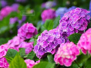 花のクローズアップの写真・画像素材[4525403]
