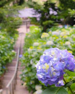 風景 - No.601868
