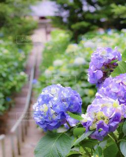 風景 - No.601870