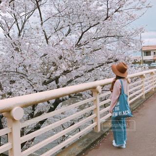 春 - No.465062