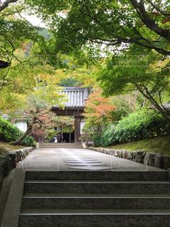 南禅寺の写真・画像素材[1104137]