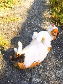 猫の写真・画像素材[201967]