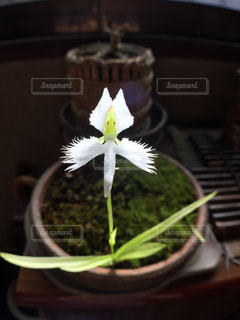 花の写真・画像素材[209484]
