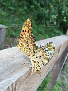 自然の写真・画像素材[216445]