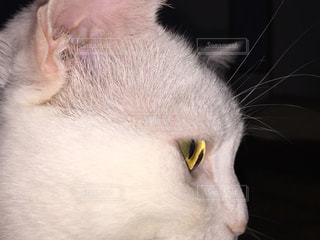 猫の写真・画像素材[223414]