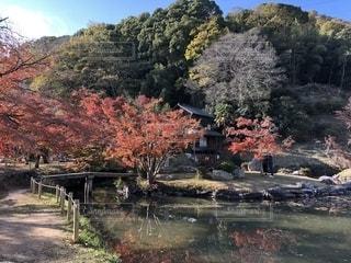 近水園の秋の写真・画像素材[1884206]