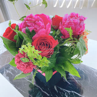 ピンクのお花の写真・画像素材[4482535]