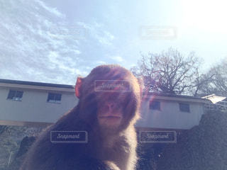 No.193166 猿