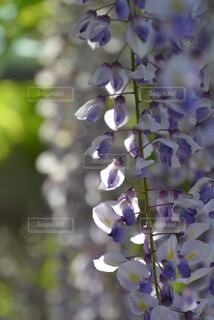花のクローズアップの写真・画像素材[4486968]