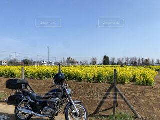 空がメイン中央菜の花アメリカンバイクはオマケの写真・画像素材[4480610]