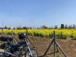 青空と菜の花とアメリカンバイクの写真・画像素材[4480612]