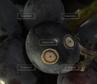 食べ物の写真・画像素材[194211]