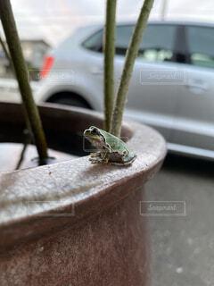 カエルの写真・画像素材[4486857]