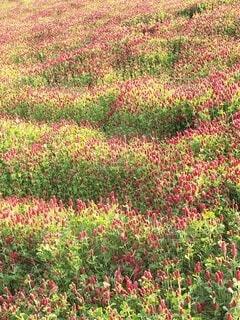 花園のクローズアップの写真・画像素材[4486458]