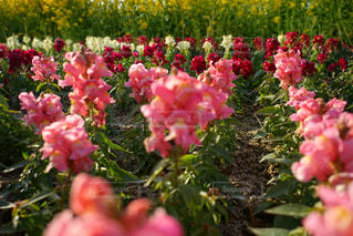 花の写真・画像素材[323926]