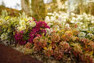 花の写真・画像素材[323927]