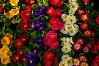 花の写真・画像素材[323928]