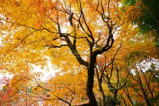 秋の写真・画像素材[323983]