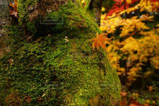 秋の写真・画像素材[323985]