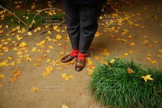秋の写真・画像素材[323993]