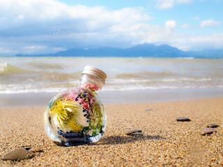 湖岸に咲く花の写真・画像素材[4486206]