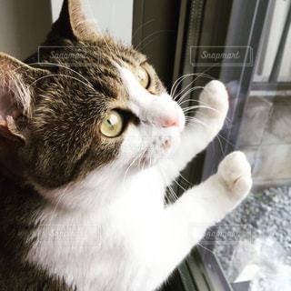 猫の写真・画像素材[195315]