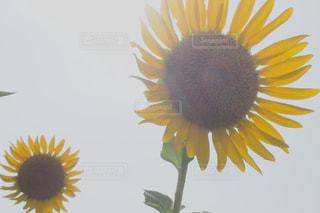 自然の写真・画像素材[195590]