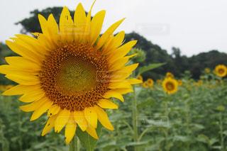花の写真・画像素材[195604]