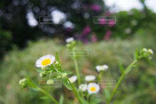 自然の写真・画像素材[202076]