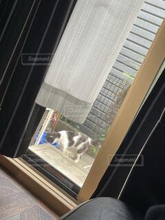 庭の野良猫の写真・画像素材[4476980]