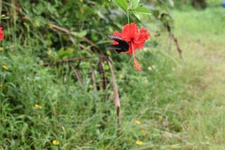 蝶がとまった花の写真・画像素材[4488583]