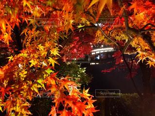 風景 - No.198442