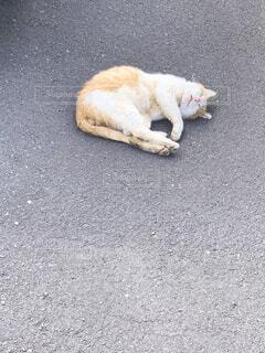 お昼寝猫の写真・画像素材[4480422]